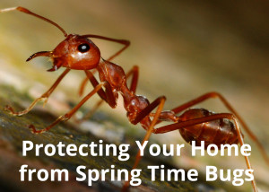 Protecting Your Home from Spring Bugs